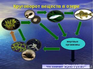 Круговорот веществ в озереЧто означает черная стрелка?