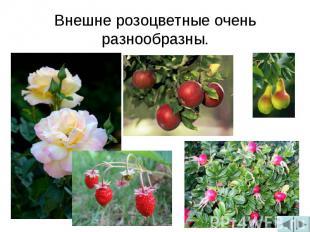 Внешне розоцветные очень разнообразны.