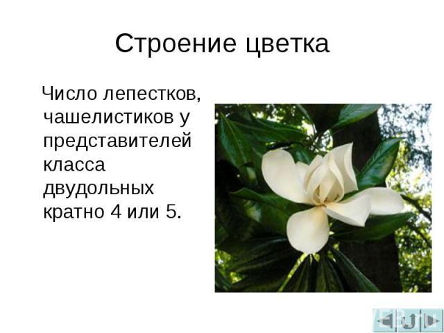 Строение цветка Число лепестков, чашелистиков у представителей класса двудольных кратно 4 или 5.