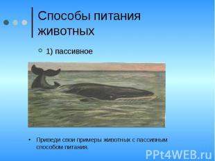 Способы питания животных1) пассивноеПриведи свои примеры животных с пассивным сп