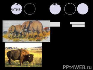 Способы питания животных2. Активное:а) пастьбаб) поиск