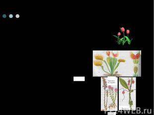 Способы питания растений1)фотосинтезирующие растения2) растения- хищники3) расте
