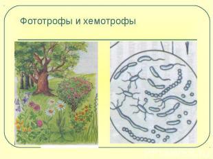 Фототрофы и хемотрофы