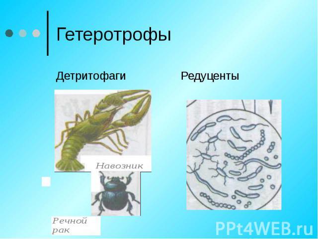 ГетеротрофыДетритофагиРедуценты