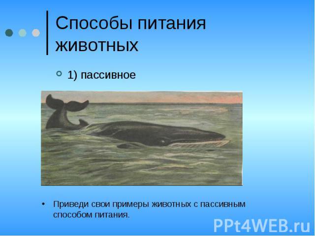 Способы питания животных1) пассивноеПриведи свои примеры животных с пассивным способом питания.