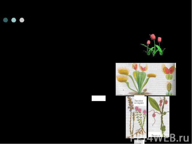 Способы питания растений1)фотосинтезирующие растения2) растения- хищники3) растения- паразиты