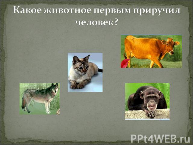 Какое животное первым приручил человек?