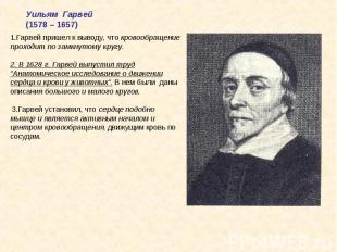 Уильям Гарвей(1578 – 1657)1.Гарвей пришел к выводу, что кровообращение проходит