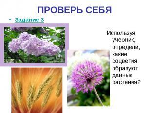 ПРОВЕРЬ СЕБЯИспользуя учебник, определи, какие соцветия образуют данные растения