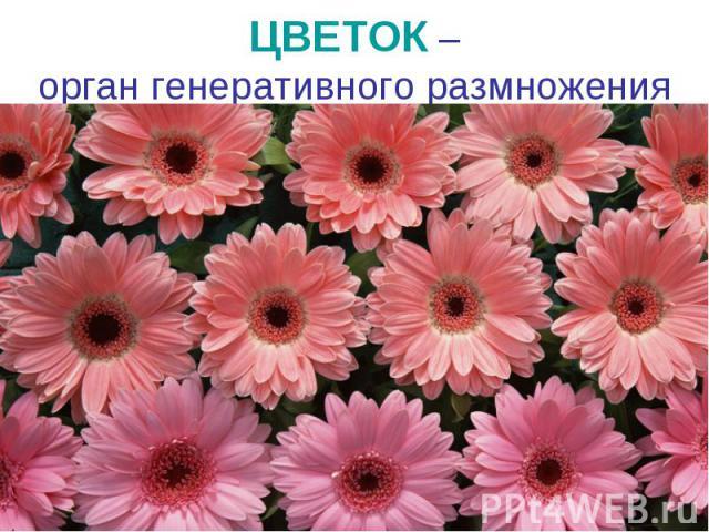 Цветок – орган генеративного размножения