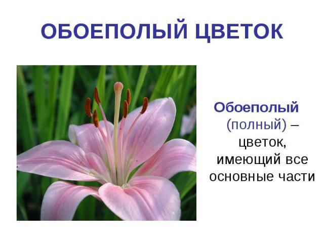 ОБОЕПОЛЫЙ ЦВЕТОКОбоеполый (полный) – цветок, имеющий все основные части