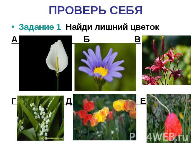 ПРОВЕРЬ СЕБЯЗадание 1 Найди лишний цветокА Б ВГ Д Е