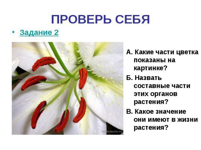 ПРОВЕРЬ СЕБЯЗадание 2 А. Какие части цветка показаны на картинке?Б. Назвать составные части этих органов растения?В. Какое значение они имеют в жизни растения?
