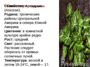 Сингониум – SyngoniumСемейство: Ароидные (Araceae).Родина: тропические районы Це