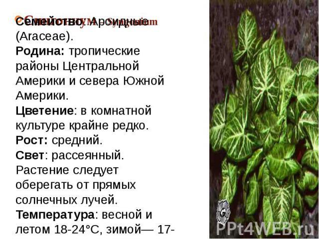 Сингониум – SyngoniumСемейство: Ароидные (Araceae).Родина: тропические районы Центральной Америки и севера Южной Америки.Цветение: в комнатной культуре крайне редко.Рост: средний.Свет: рассеянный. Растение следует оберегать от прямых солнечных лучей…