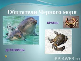 Обитатели Черного моряКРАБЫДЕЛЬФИНЫ