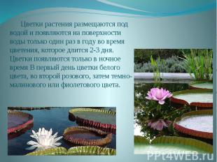 Цветки растения размещаются под водой и появляются на поверхности воды только од