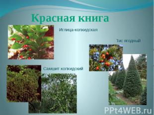 Красная книгаИглица-колхидскаяТис ягодныйСамшит колхидский