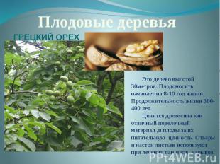 Плодовые деревьяГРЕЦКИЙ ОРЕХЭто дерево высотой 30метров. Плодоносить начинает на