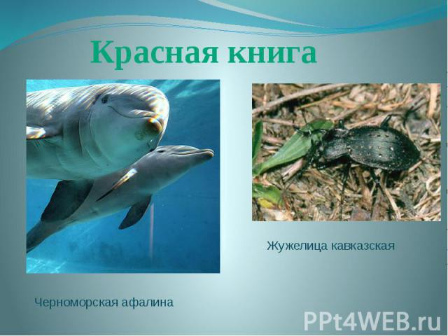 Красная книгаЖужелица кавказскаяЧерноморская афалина