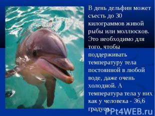 В день дельфин может съесть до 30 килограммов живой рыбы или моллюсков. Это необ