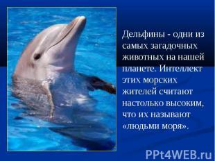 Дельфины - одни из самыхзагадочных животных на нашей планете. Интеллект этих мо