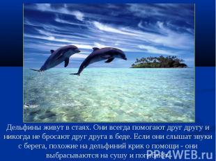 Дельфины живут в стаях. Они всегда помогают друг другу и никогда не бросают друг