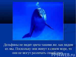 Дельфины не видят цвета такими же, как видим их мы. Поскольку они живут в синем
