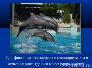 Дельфинов часто содержат в океанариумах и в дельфинариях, где они могут размножа