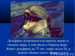 Дельфины встречаются во многих морях и океанах мира, в том числе в Черном море.