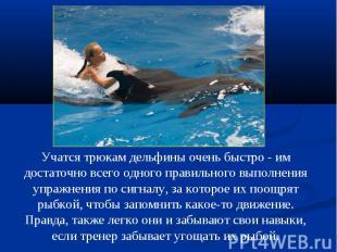 Учатся трюкам дельфины очень быстро - им достаточно всего одного правильного вып