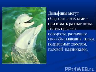 Дельфины могут общаться и жестами - принимать разные позы, делать прыжки, поворо