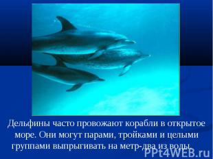 Дельфины часто провожают корабли в открытое море. Они могут парами, тройками и ц