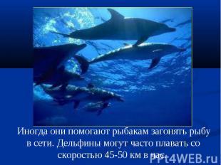 Иногда они помогают рыбакам загонять рыбу в сети. Дельфины могут часто плавать