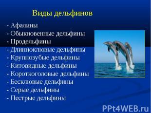 Виды дельфинов- Афалины - Обыкновенные дельфины- Продельфины - Длинноклювые дель
