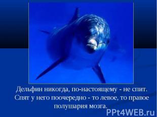 Дельфин никогда, по-настоящему - не спит. Спят у него поочередно - то левое, то