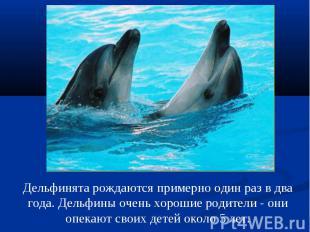 Дельфинята рождаются примерно один раз в два года. Дельфины очень хорошие родите