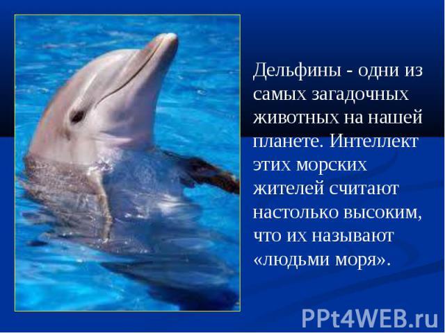 Дельфины - одни из самыхзагадочных животных на нашей планете. Интеллект этих морских жителей считают настолько высоким, что их называют «людьми моря».