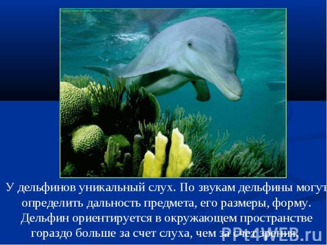 У дельфинов уникальный слух. По звукам дельфины могут определить дальность предмета, его размеры, форму. Дельфин ориентируется в окружающем пространстве гораздо больше за счет слуха, чем за счет зрения.