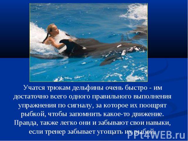 Учатся трюкам дельфины очень быстро - им достаточно всего одного правильного выполнения упражнения по сигналу, за которое их поощрят рыбкой, чтобы запомнить какое-то движение.Правда, также легко они и забывают свои навыки, если тренер забывает угоща…