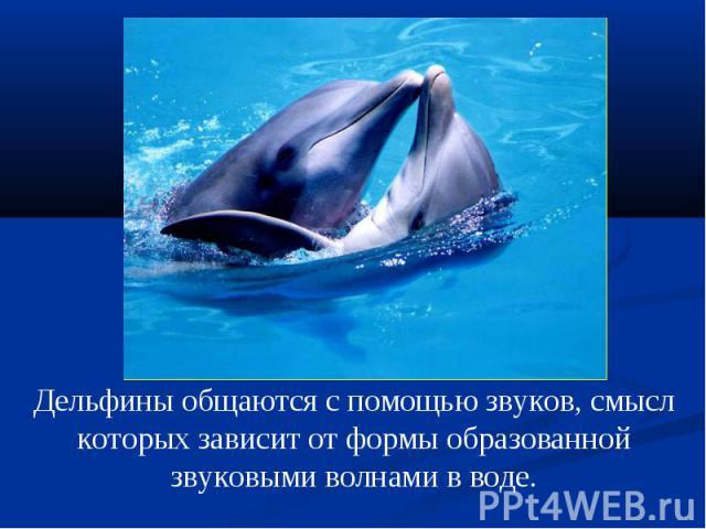 Дельфины общаются с помощью звуков, смысл которых зависит от формы образованной звуковыми волнами в воде.