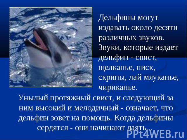 Дельфинымогут издавать около десяти различных звуков. Звуки, которые издает дельфин - свист, щелканье, писк, скрипы, лай, мяуканье, чириканье.Унылый протяжный свист, и следующий за ним высокий и мелодичный - означает, что дельфин зовет на помощь. К…
