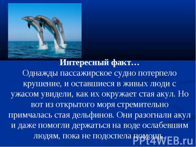 Интересный факт…Однажды пассажирское судно потерпело крушение, и оставшиеся в живых люди с ужасом увидели, как их окружает стая акул. Но вот из открытого моря стремительно примчалась стая дельфинов. Они разогнали акул и даже помогли держаться на вод…