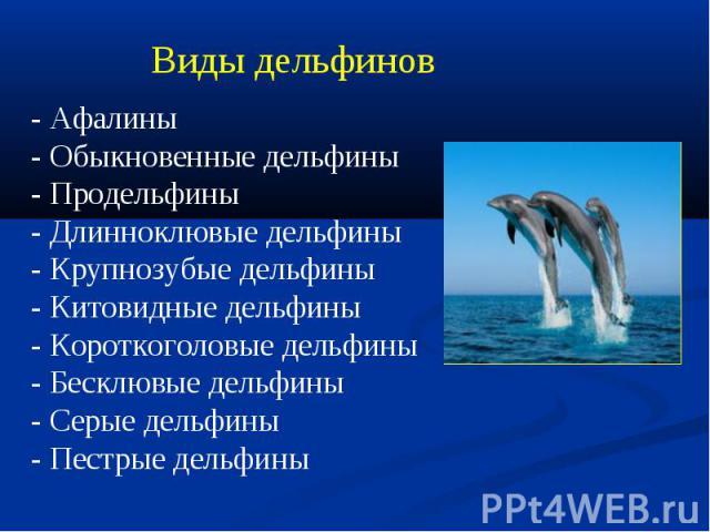 Виды дельфинов- Афалины - Обыкновенные дельфины- Продельфины - Длинноклювые дельфины - Крупнозубые дельфины- Китовидные дельфины - Короткоголовые дельфины- Бесклювые дельфины- Серые дельфины - Пестрые дельфины