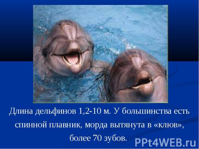 Длина дельфинов 1,2-10 м. У большинства есть спинной плавник, морда вытянута в «клюв», более 70 зубов.