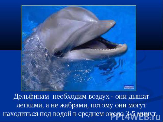 Дельфинам необходим воздух - они дышат легкими, а не жабрами, потому они могут находиться под водой в среднем около 3-5 минут.