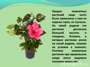 Предки комнатных растений чаще всего были привезены к нам из жарких стран, из пу