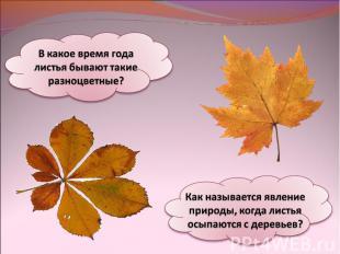 В какое время года листья бывают такие разноцветные?Как называется явление приро
