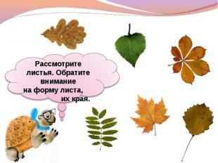 Рассмотрите листья. Обратите внимание наформу листа, их края.