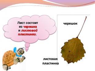 Лист состоит изчерешка илистовой пластинки. черешок листовая пластинка